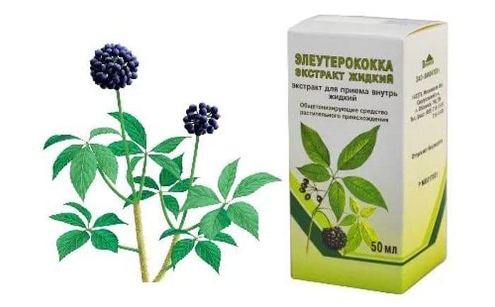 Применение элеутерококка: полезные свойства и противопоказания