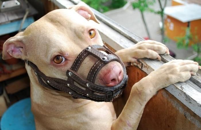 Укусы животных: что делать, если вас укусила собака или кошка