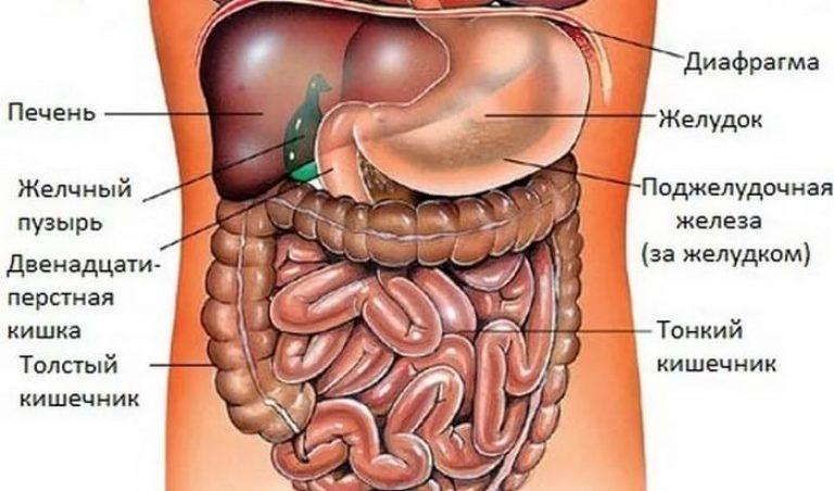 Болит в левом боку беременность 16 недель