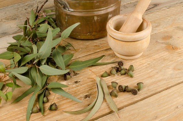 применение масла эвкалипта