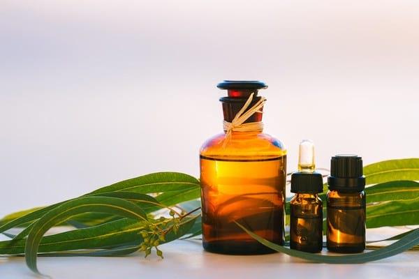 Что можно и нужно лечить маслом эвкалипта