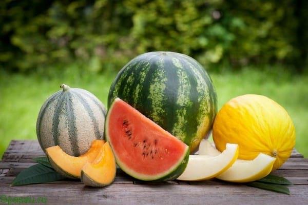 Безвредные и эффективные мочегонные растения, продукты-диуретики, таблетки на травах