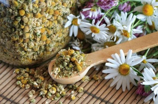 Безвредные и эффективные мочегонные травы