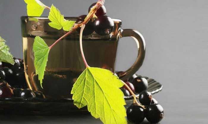Вред смородинового чая