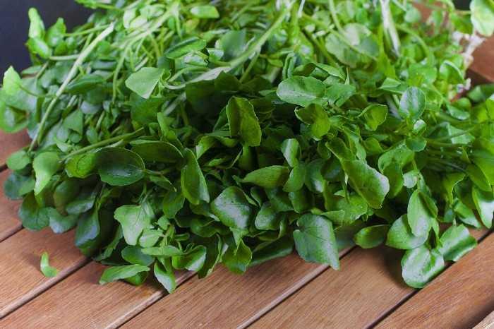 Самые эффективные травы от сахарного диабета