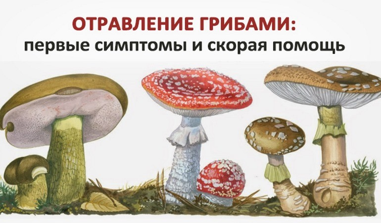 Отравление грибами - симптомы, признаки, профилактика