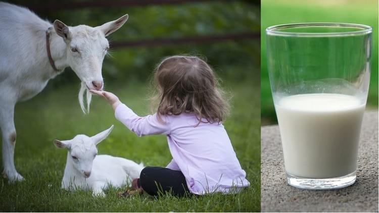 Можно ли взрослым пить молоко после 40 лет