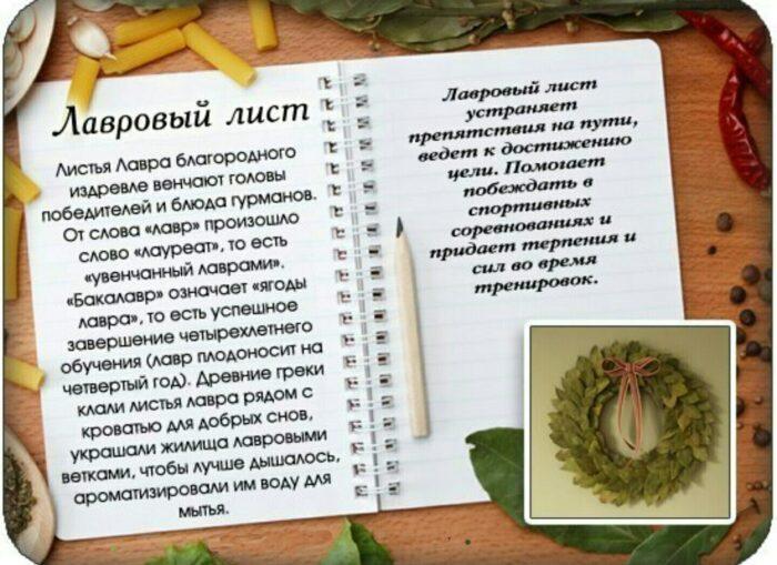 особенности лаврового листа