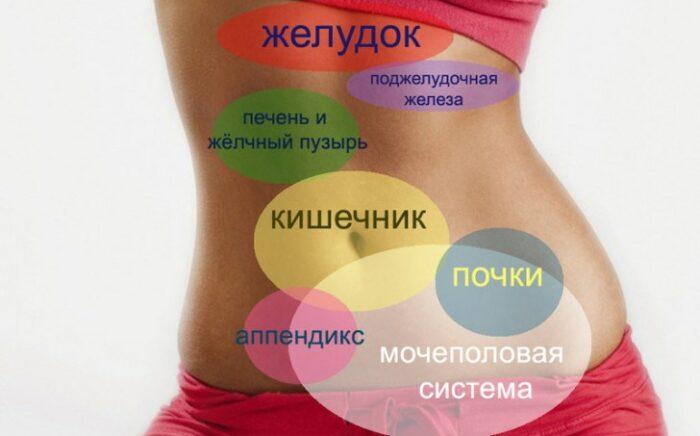 внутренние органы женщины