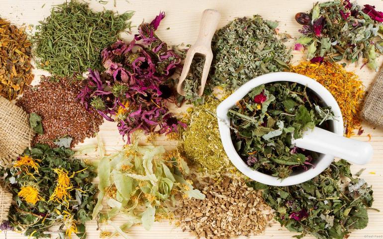 Какие травы помогают от запора: лечение фитотерапией