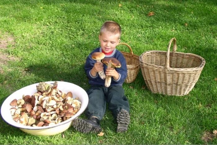 мальчик держит гриб