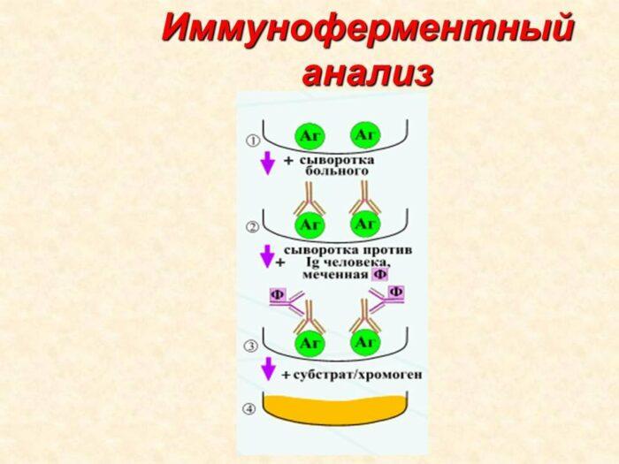 иммуноферментный анализ