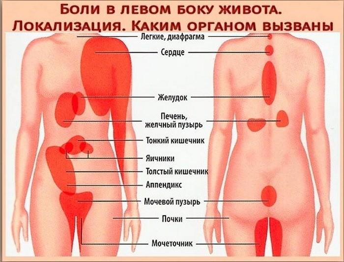 органы женщины