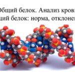 норма общего белка в крови у мужчин